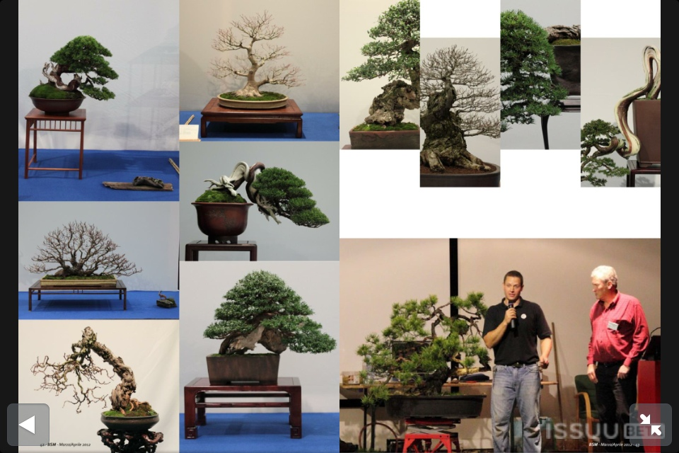 Bonsai Inspirations Pdf