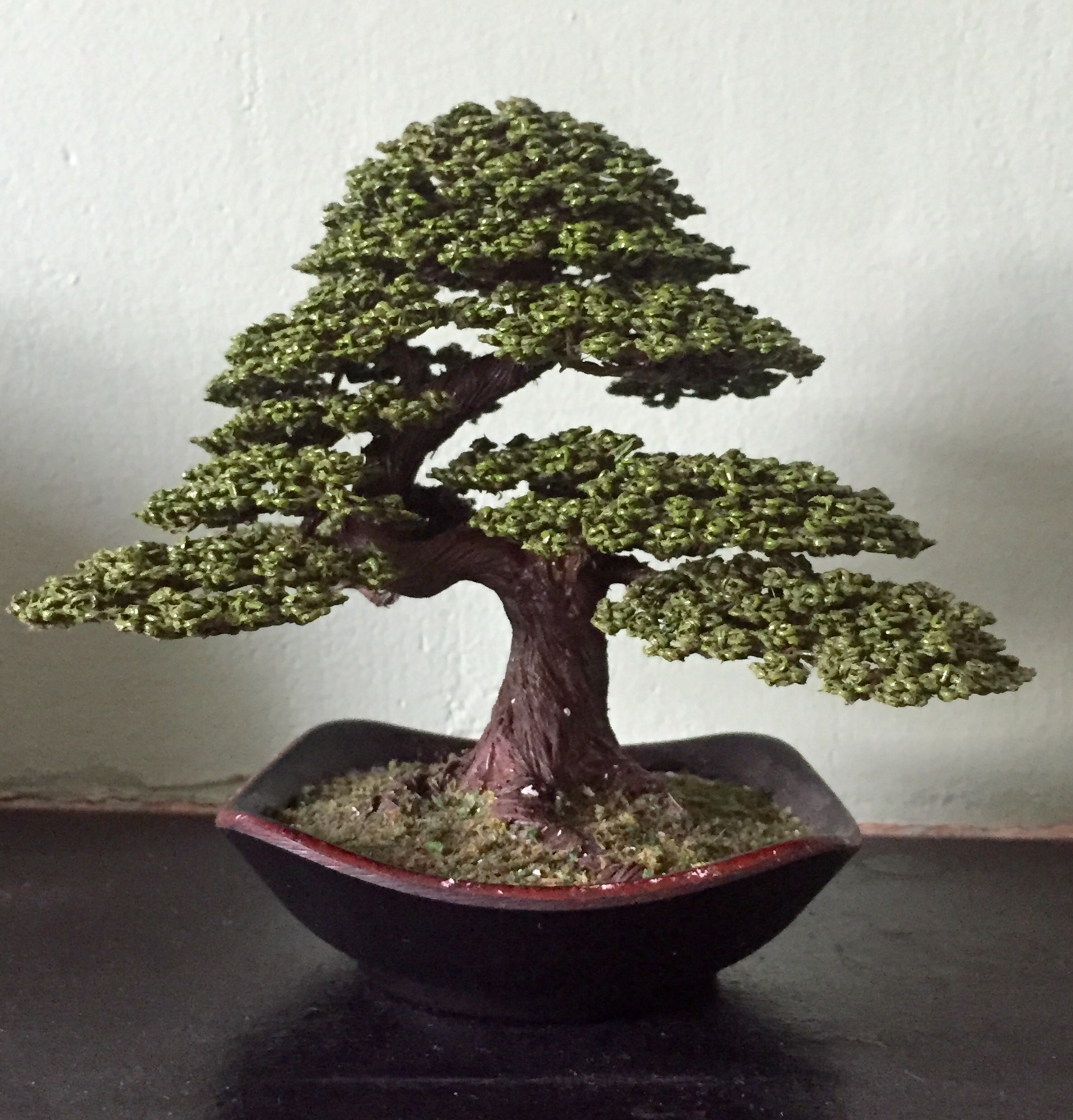 Awesome Wire Tree Japanese White Pine Bonsai Wales Wiring Digital Resources Sapebecompassionincorg